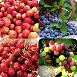 Apples Blueberries Cherries Grapes