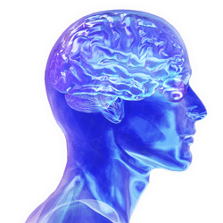 Humain Brain Health Tips