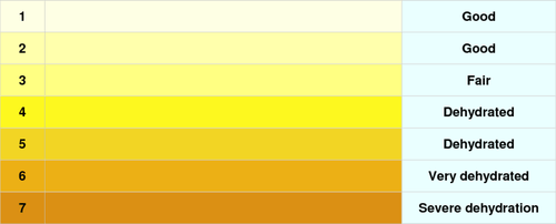 Color of Your Urine