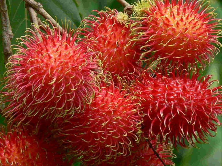 Health Benefits of Rambutan : Human N Health