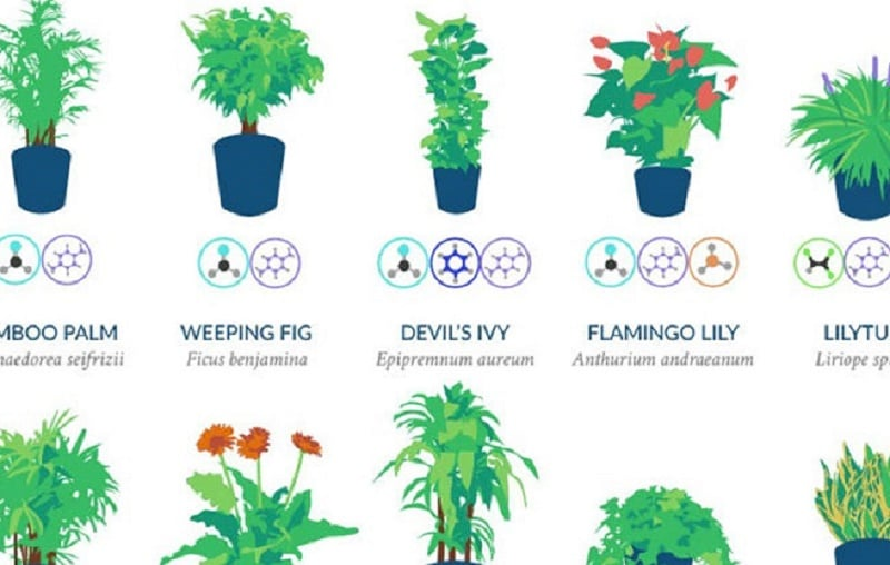 Air Purifying House Plants Safe For Cats