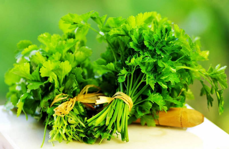 Cilantro and Chlorella