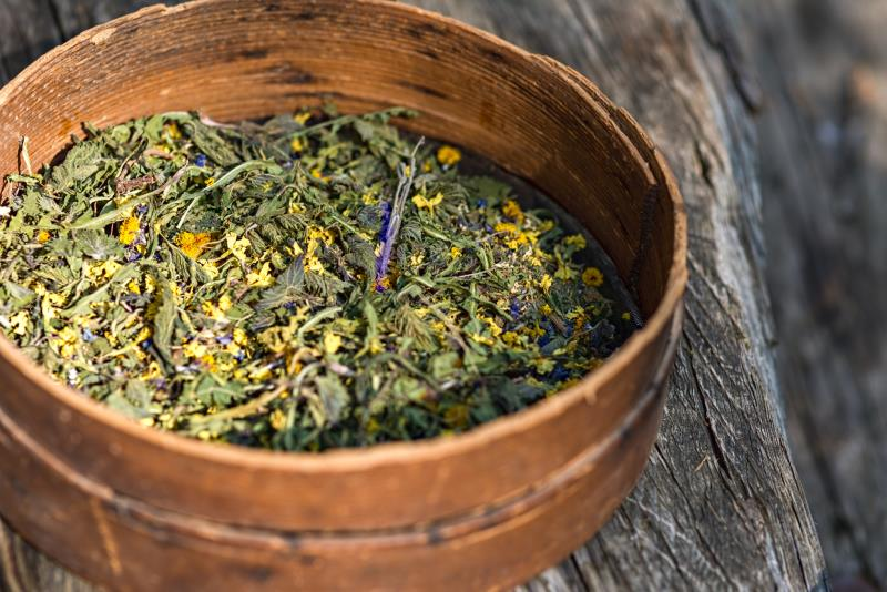 Native American Tea Cures Cancer