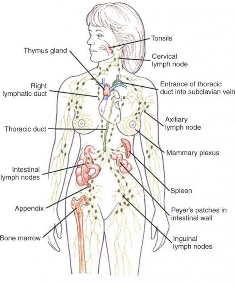 Draine-Your-Lymph-Fluid