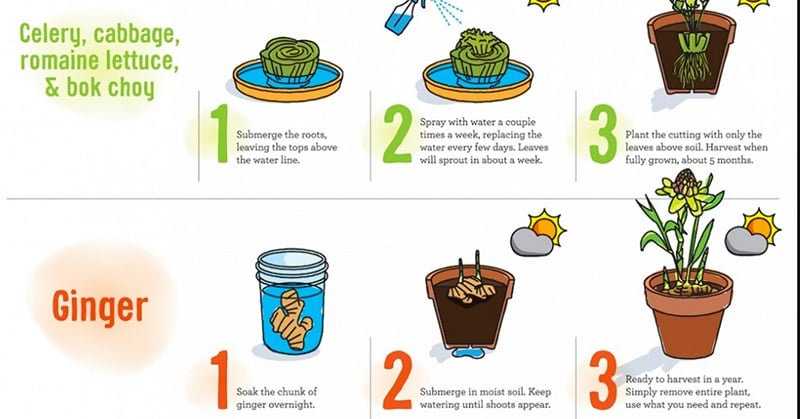 Foods Grow at Home