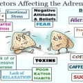 Stages of Adrenal Fatigue