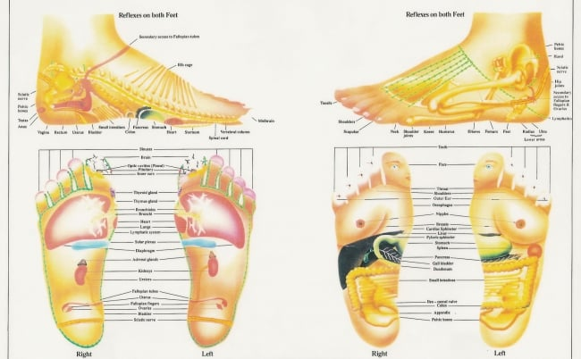 Reflexology erogenous zones