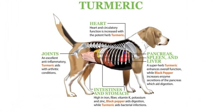 tumeric for Dogs