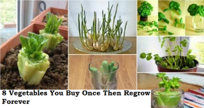 Vegetables you Regrow