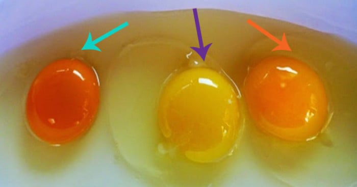 How to Tell If Your Eggs Came From a Sick Chicken