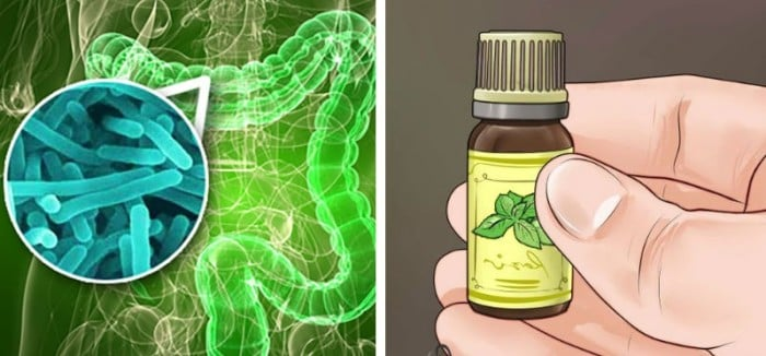 Use Essential Oils to Kill Infectious Bacteria