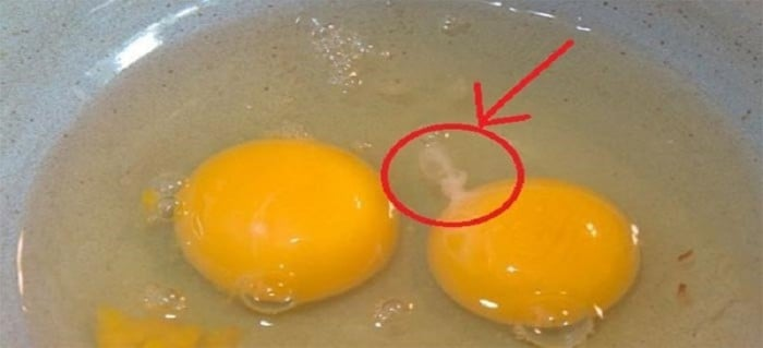 Why There's 'White Strings' Attached To The Egg Yolk