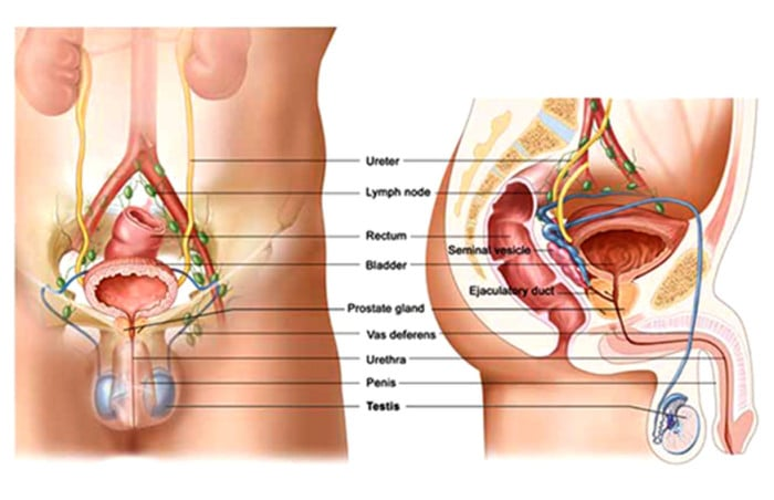 Prostate Disorders