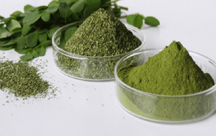 moringa-herb-that-kills-cancer-and-stops-diabetes