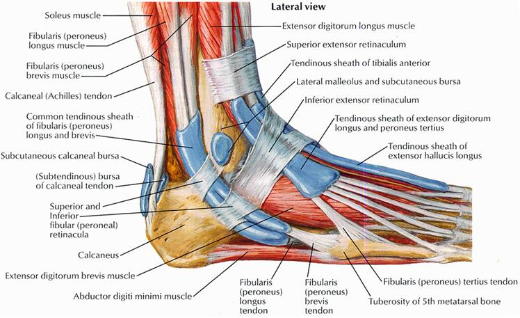 Foot Tendonitis