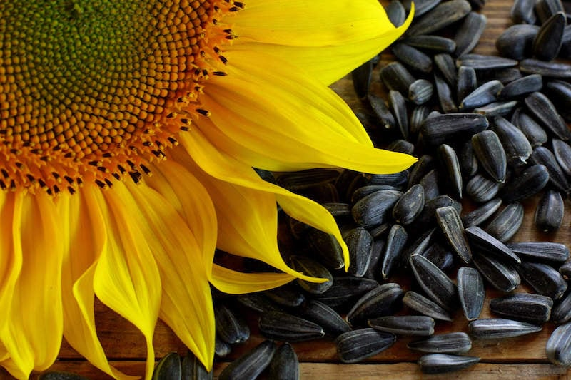 how to clean sunflower seeds