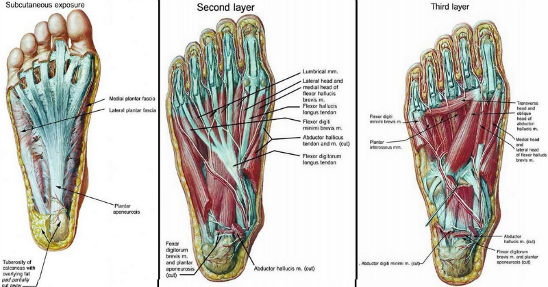 foot strengthening exersises