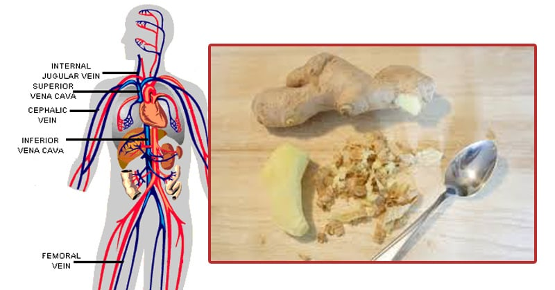 Why You Should Have Ginger Every Day   Human N Health