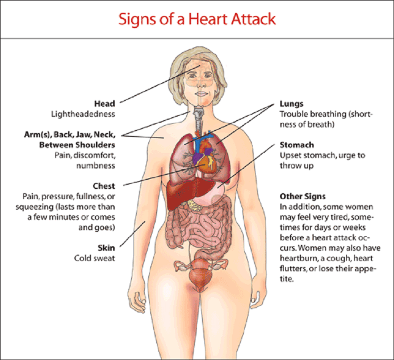 7 Warning Signs of Heart Attack In Women : Human N Health